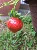 Frisch vom Garten auf den Tisch