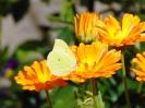 In unseren Garten_1